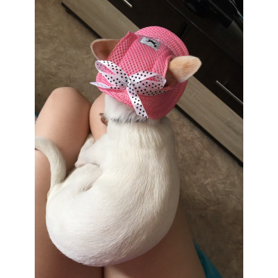 Chapeau pour chihuahua