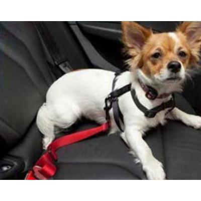 Laisse ceinture de sécurité pour chien
