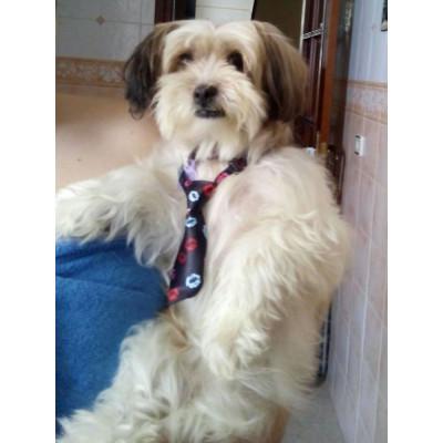 chien en cravate