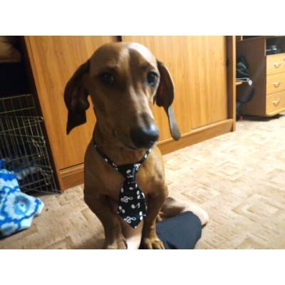 Cravate décoration musique pour chien
