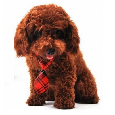 Cravate écossaise pour chien