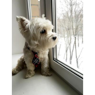 Manteau REVERSIBLE polaire et tissu pour chien