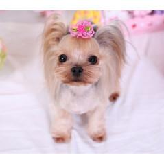 Combinaison en polaire rose look PELUCHE pour chienne