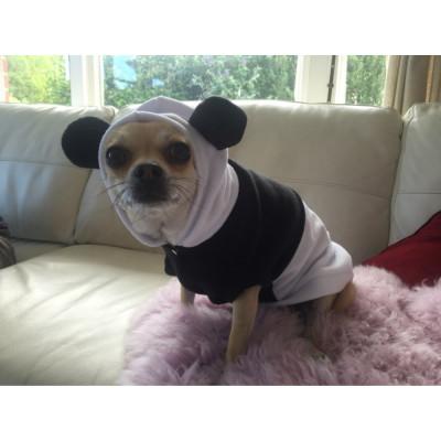 Tenue de panda pour chihuahua