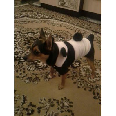 Petit chien déguisé en panda
