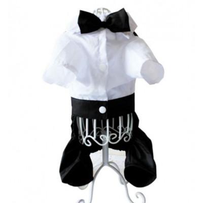 Costume noeud papillon pour chien