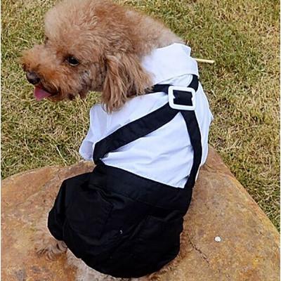 Costume complet pour chien