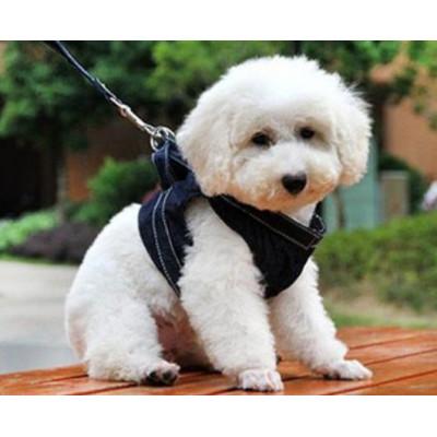 Harnais veste sur chien