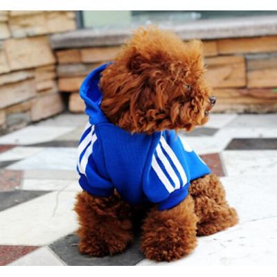 chien en sweat de sport