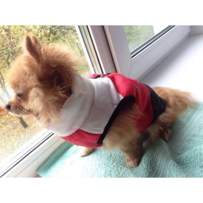 manteau gilet pour petit chien