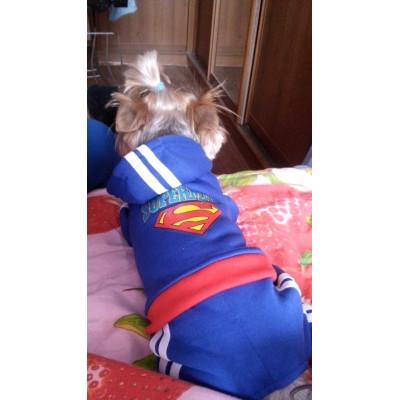 tenue sport pour chien