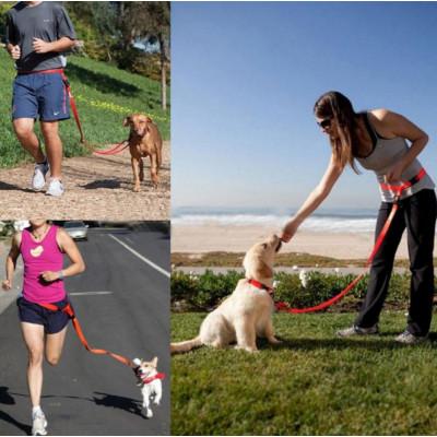 accessoire de sport pour chien