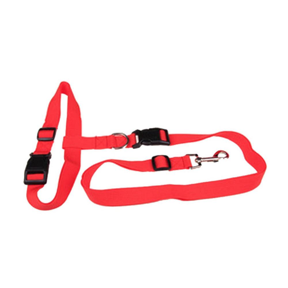 laisse et ceinture pour sport canin