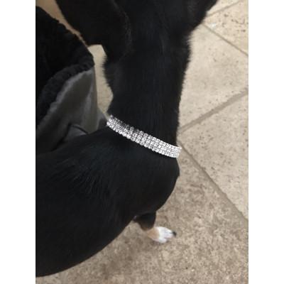 bijou cou pour chien