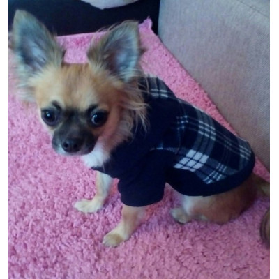 pull hiver pour chihuahua