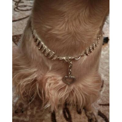 Bijou strass pour petit chien