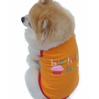 maillot birthday pour chien