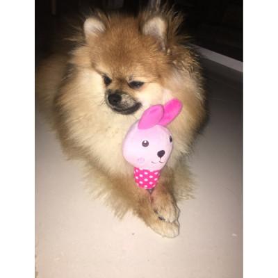 Jouet sonore peluche pour chien