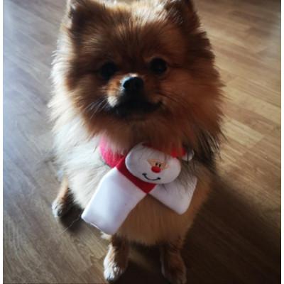 tour de cou de Noël pour chien