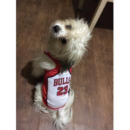 maillot basket nba pour chien