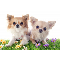 Vêtements printemps-été pour chien : t-shirts, chemises, robes, vestes