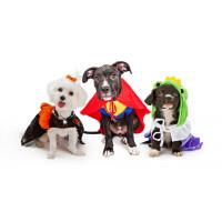 Habits de fêtes: des vêtements originaux pour chien