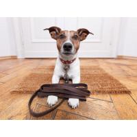 Accessoires pour chien: casquettes, bijoux, colliers, jouets...