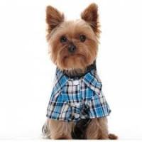 Vestes et chemises pour chien