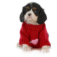 Pulls pour chien: en tricots, à col roulé, polaire...