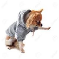 Sweat pour chien - vêtement à capuche mode - Vêt'chien