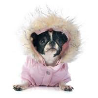Doudounes pour chien- manteaux d'hiver - Vêt'chien