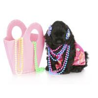 Bijoux pour chien: accessoire mode canine de luxe