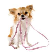 Laisses, colliers et harnais pour chien