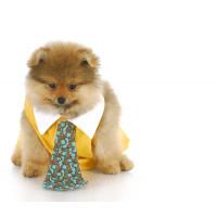 Cravates et noeuds papillons pour chien - accessoires smoking