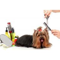 Accessoires utiles pour chien- confort, hygiène et soin - Vêt'chien
