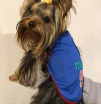 maillot-chien-italie