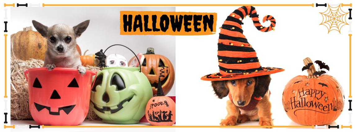 déguisement halloween pour chien